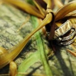 Wetlands Camo Rings for Men Images